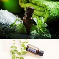 Aceite de Menta o Peppermint natural