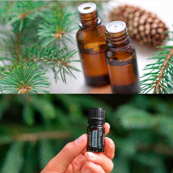 Los Increíbles Beneficios del Aceite Esencial de Abeto negro Black Spruce y como se Utiliza