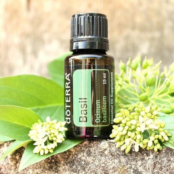 Aceite Esencial de Albahaca o Basil Oil 10 Usos, Beneficios y Aplicaciones