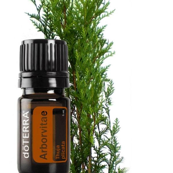 Aceite esencial doterra Arborvitae
