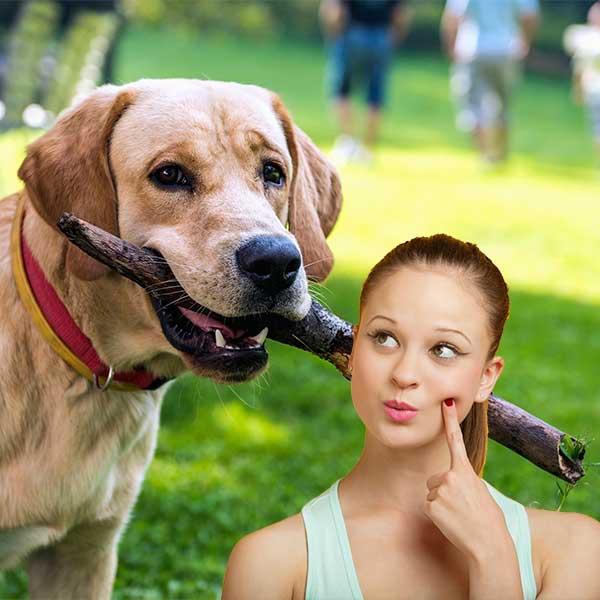 Aceites esenciales para perros