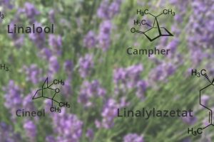 Ingredientes de aceite de lavanda 空 Dr. Schweikart Verlag