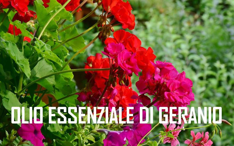 Aceite esencial de geranio para la salud