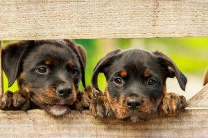 aceite esencial para Perros