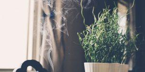 5 aceites esenciales para purificar y desinfectar el ambiente